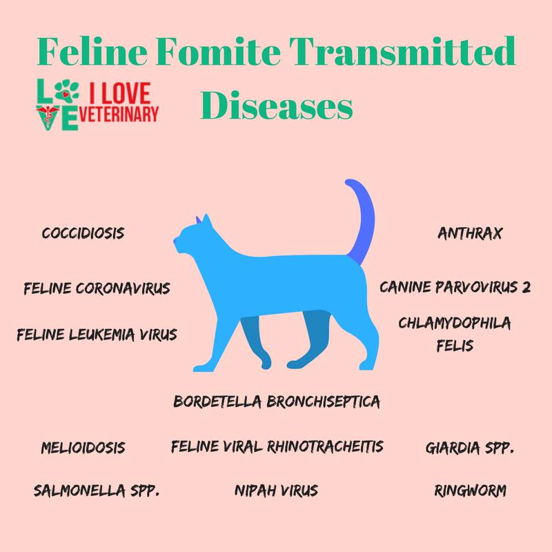Feline Fomite Transmitted Diseases Infographic Felinos