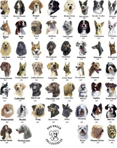 What Dog Breed Is Best For You Playbuzz