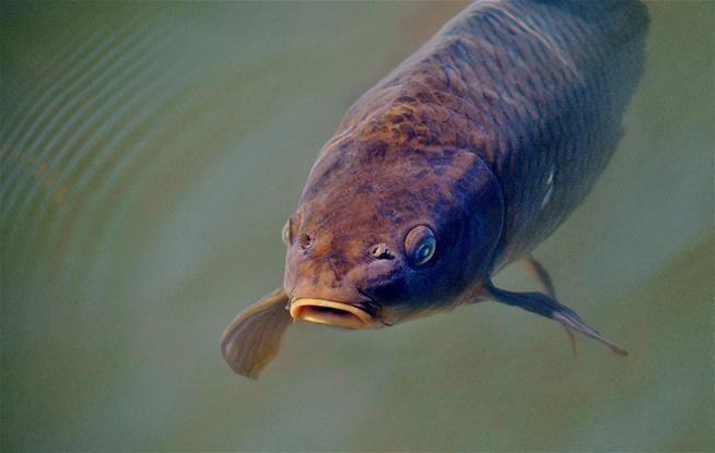 Need an Extra $1M? Just Solve This Fishy Dilemma http://ift.tt/2jKJ8ia