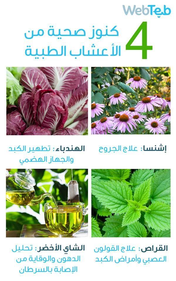 إشنسا الهندباء القراص الشاي الأخضر الاعشاب الطبية Plants Treatment Beauty