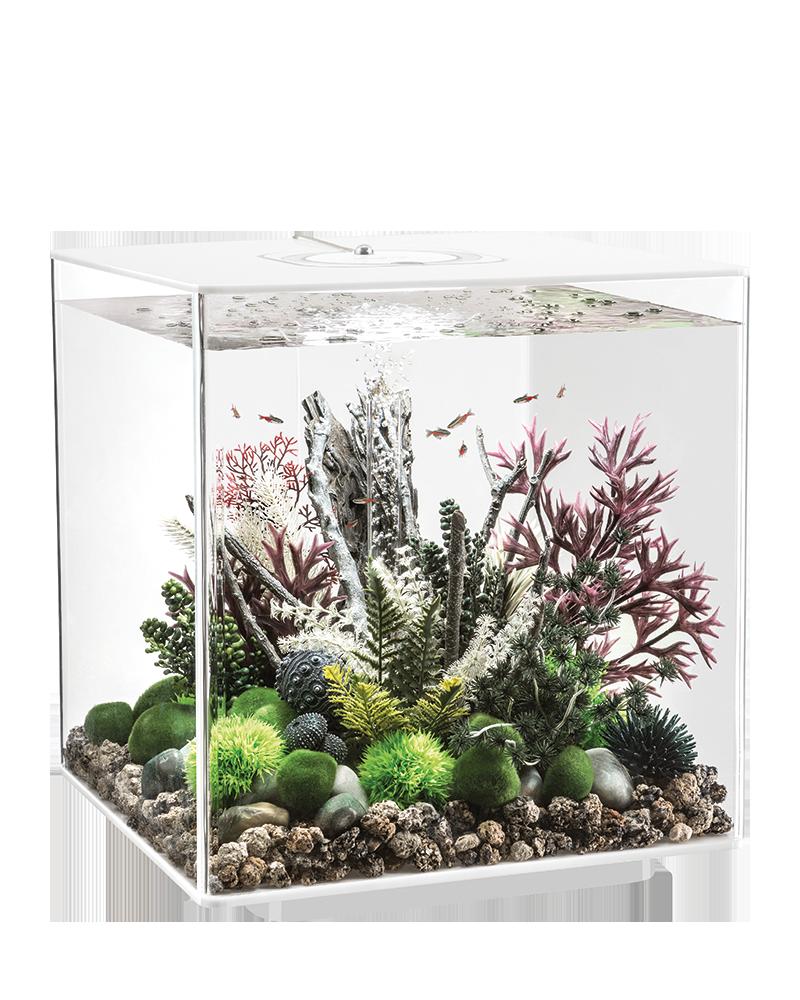 Https Biorb Com Uploads Pics Biorb Carousel Cube 04 Png Biorb Fish Tank Aquarium