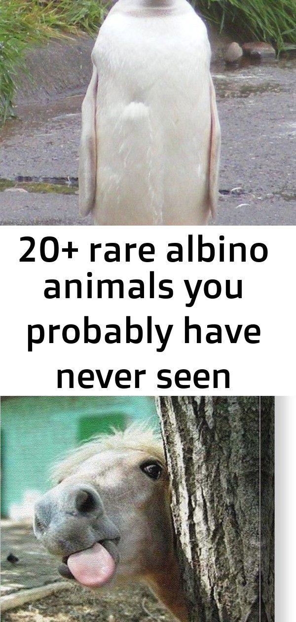 20+ rare albino animals you probably have never seen before 14 #albinoanimals