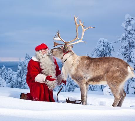 santas reindeer google search - Santa And Reindeer Pictures