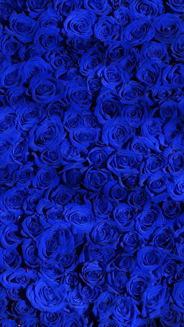 Wallpaper Iphone Blue Rose Blue Roses Wallpaper Blue Flower Wallpaper Royal Blue Wallpaper