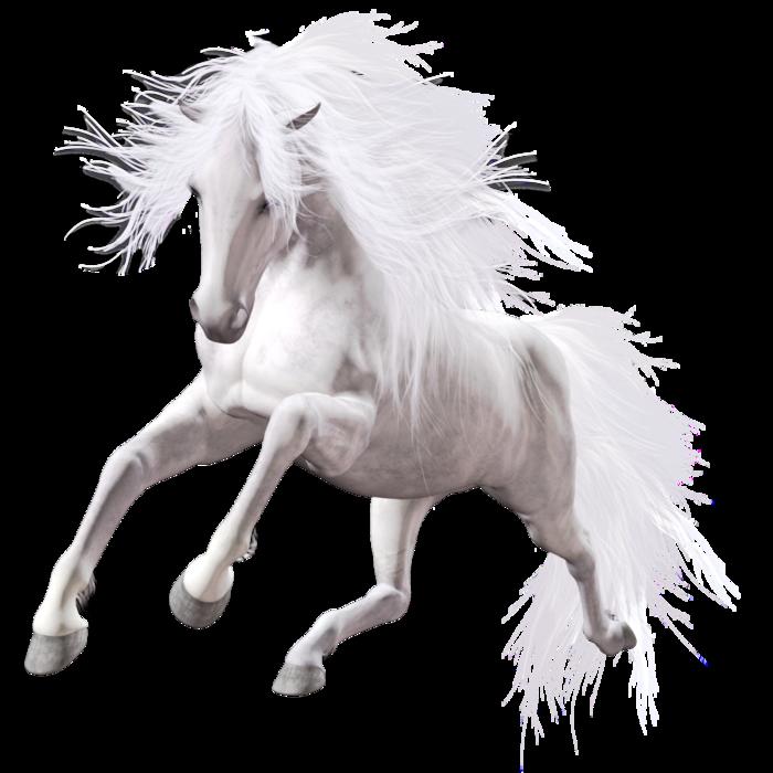 Kone Category Svet Klip Artu Horses Horse Art White Horse