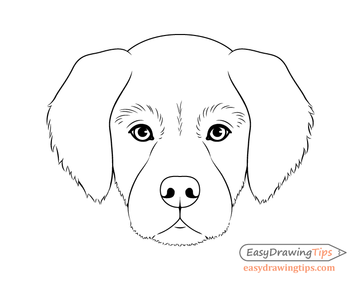 Step Pictures On How To Draw A Dog