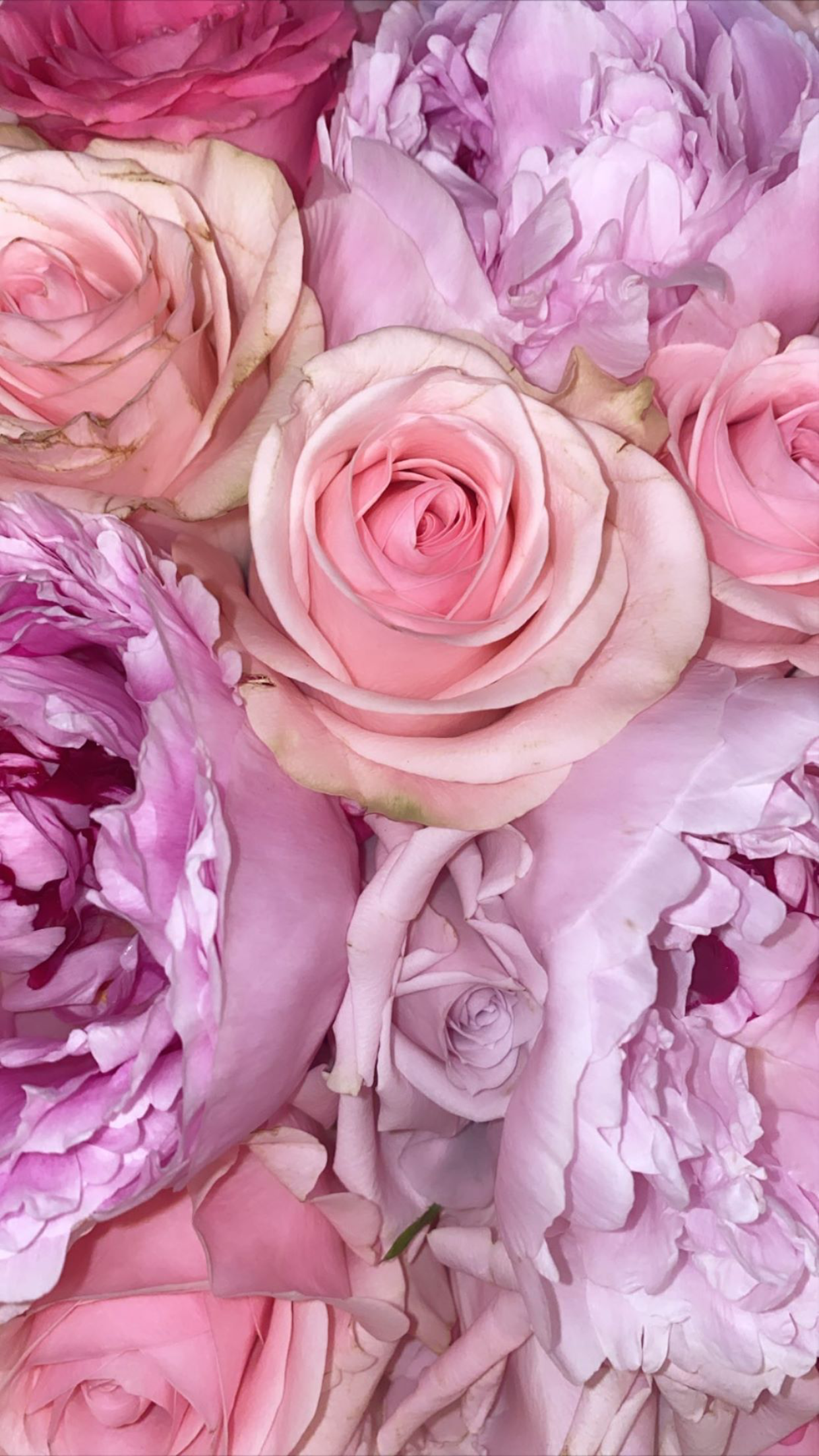 Pin On Pretty Flower Wallpapers