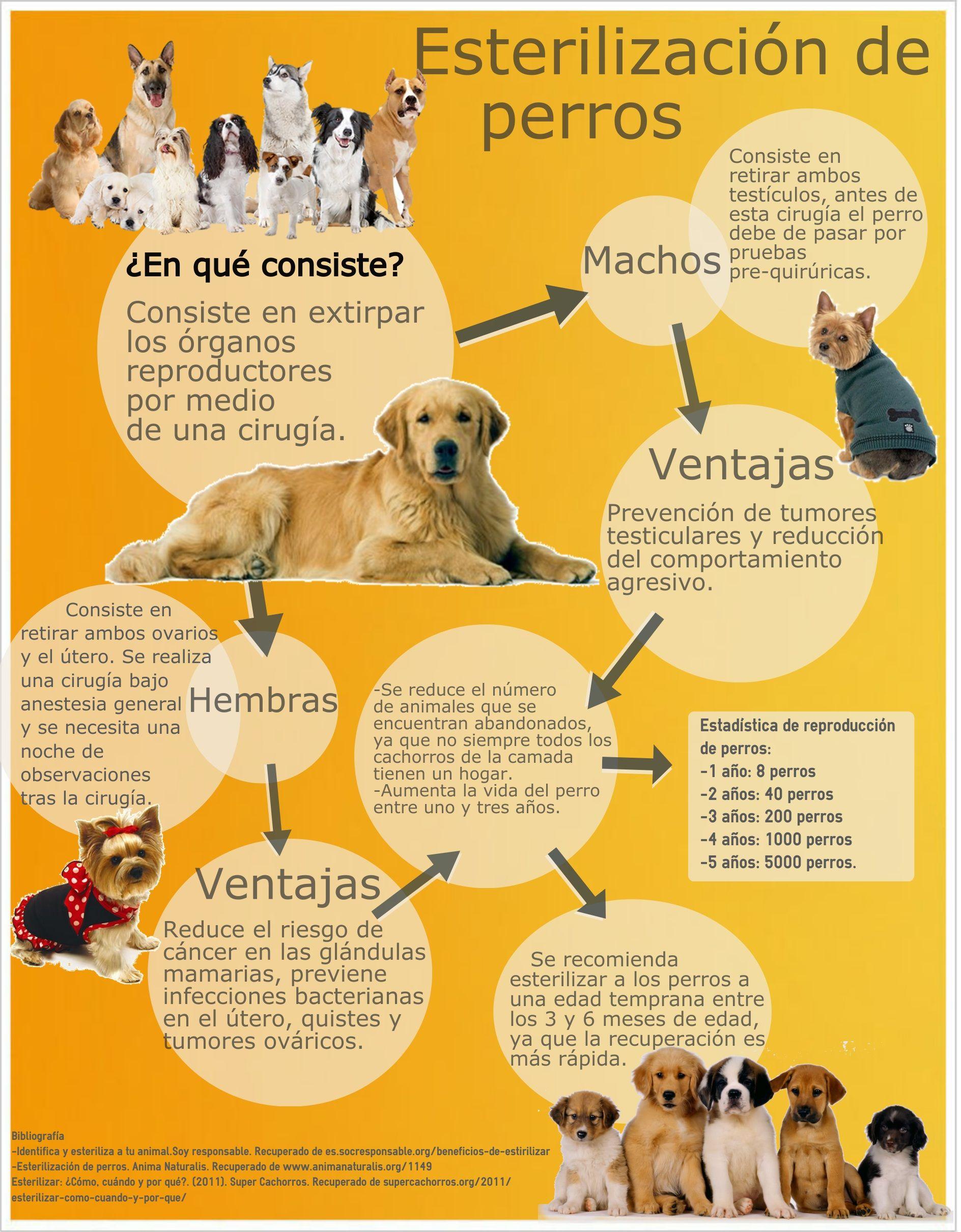 7 Ideas De Compañeros De Vida Mascotas Adoptar Refugio De Animales