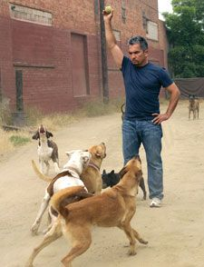 How To Build A Successful Dog Training Career Cesar Millan Dog