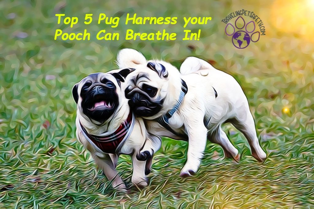 Top 5 Pug Harness Your Pooch Can Breath In Pugs Dog Safety Dog Harness