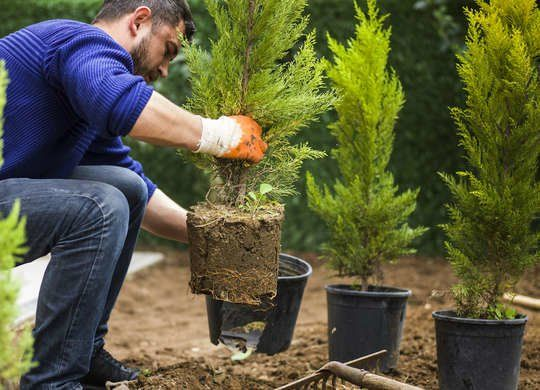 10 Things The Landscaper Won T Tell You For Free Plants