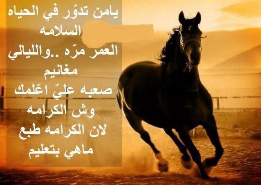 الكرامه Arabic Quotes Horses Animals