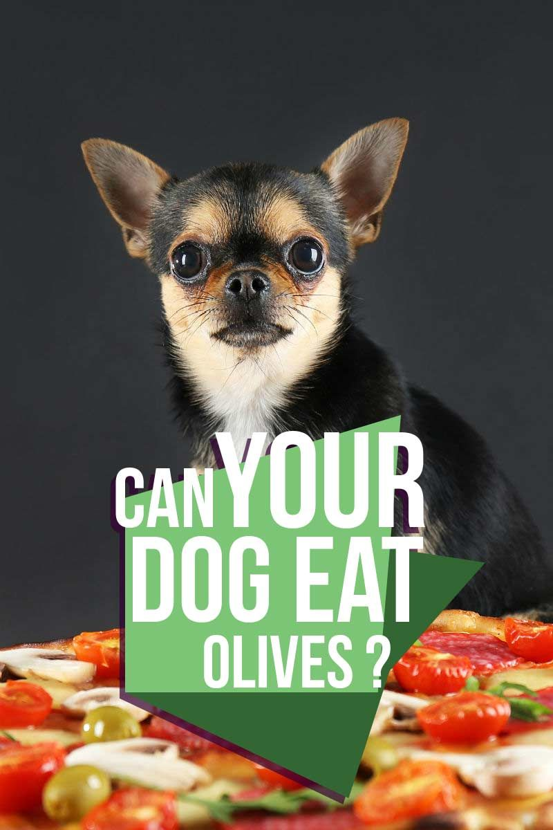 Can Dogs Eat Olives We Explain Dog Nutrition Dog Eating