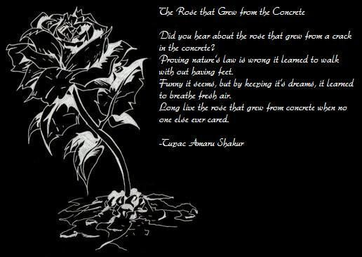 Long Live The Rose That Grew From Concrete When No One Else Ever
