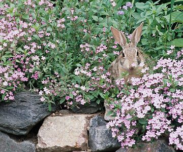 Editors' Picks: Top Rabbit-Resistant Plants
