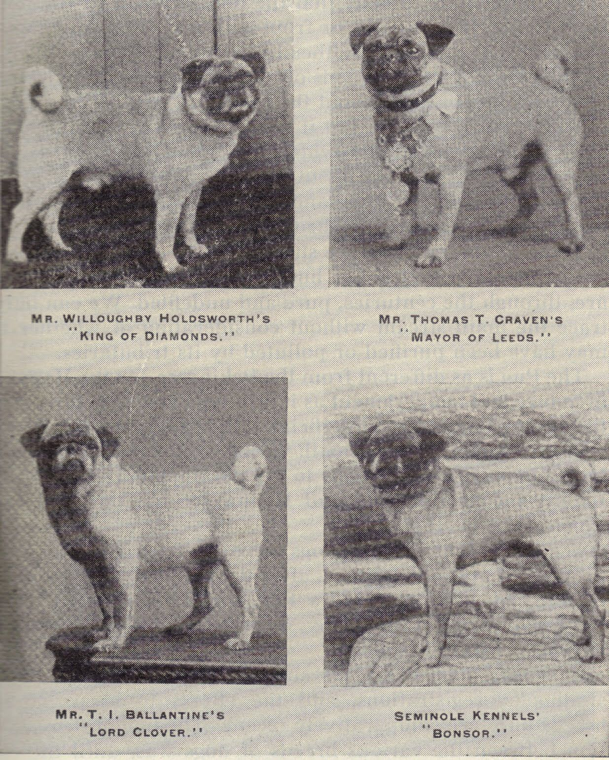 As Promised Pug History In Photos Part 1 Pugs Pug Pictures