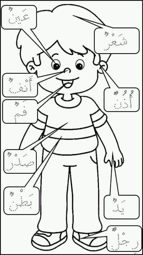 جسم الانسان للأطفال Arabic Alphabet For Kids Learning Arabic Alphabet For Kids
