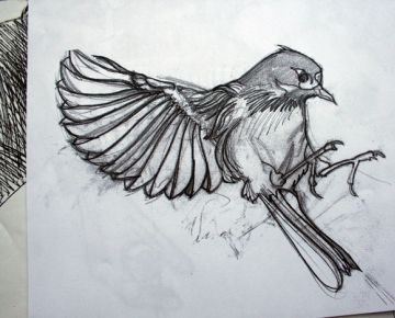 Line Art Of Birds : Wildlifeart life studies latest from captive birds