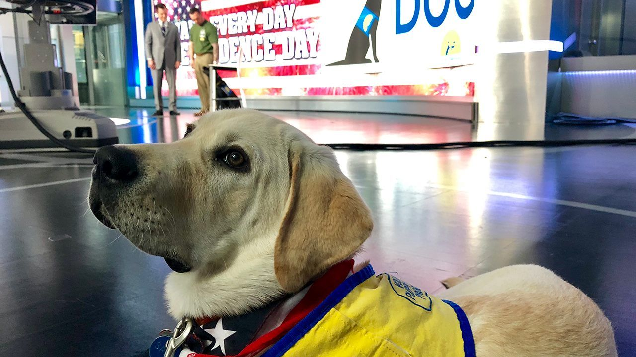 The Daily Spike Make Every Day Independence Day Service Dog
