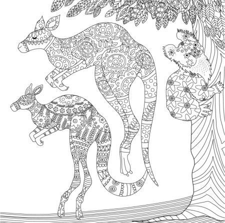 Kangaroo coloring page Animal Coloring Pages for Adults