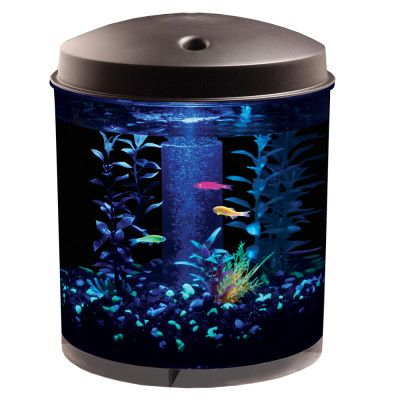 Glow In The Dark Fish How Cool Glow Fish Small Fish Tanks Glofish