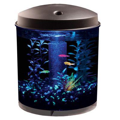 small tank for glofish