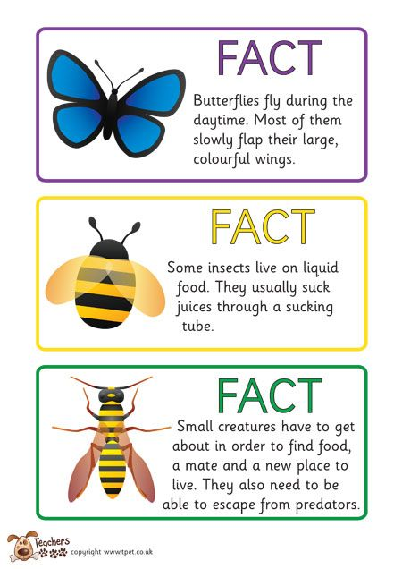 Teachers Pet - Free Minibeast Fact Cards | Science And Science