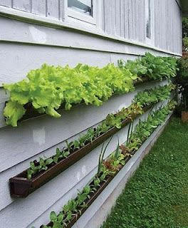 Compact wall planter garden - Uses gutters?