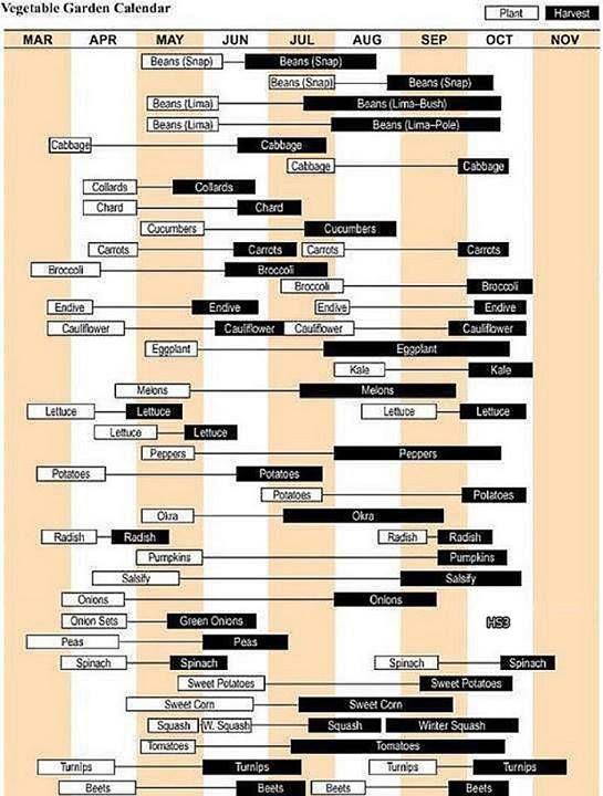 neat gantt chart of garden timing smart sustainability Pinterest