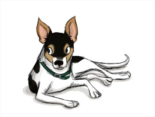 Line Drawing Rat : Rattie drawing ~rat terriers rock~ pinterest rat