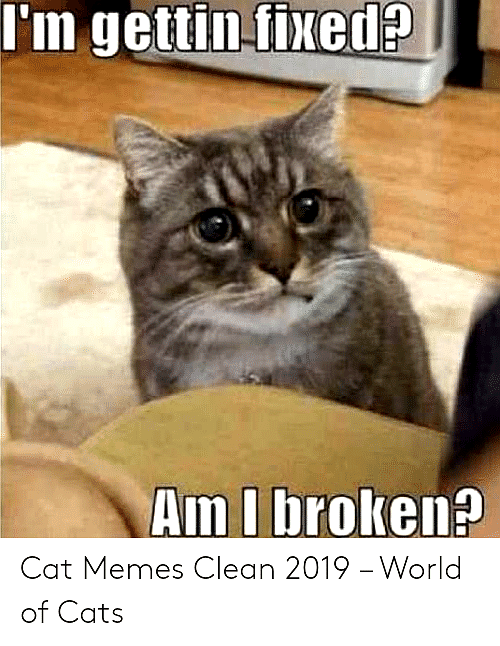 Top Laughing So Hard Cat Memes & Cat Meme 33 Genders in
