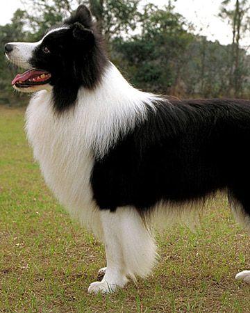 Easy Fixes To Common Dog Behavior Problems Martha Stewart Pets Herding Dogs Breeds Herding Dogs Dog Breeds