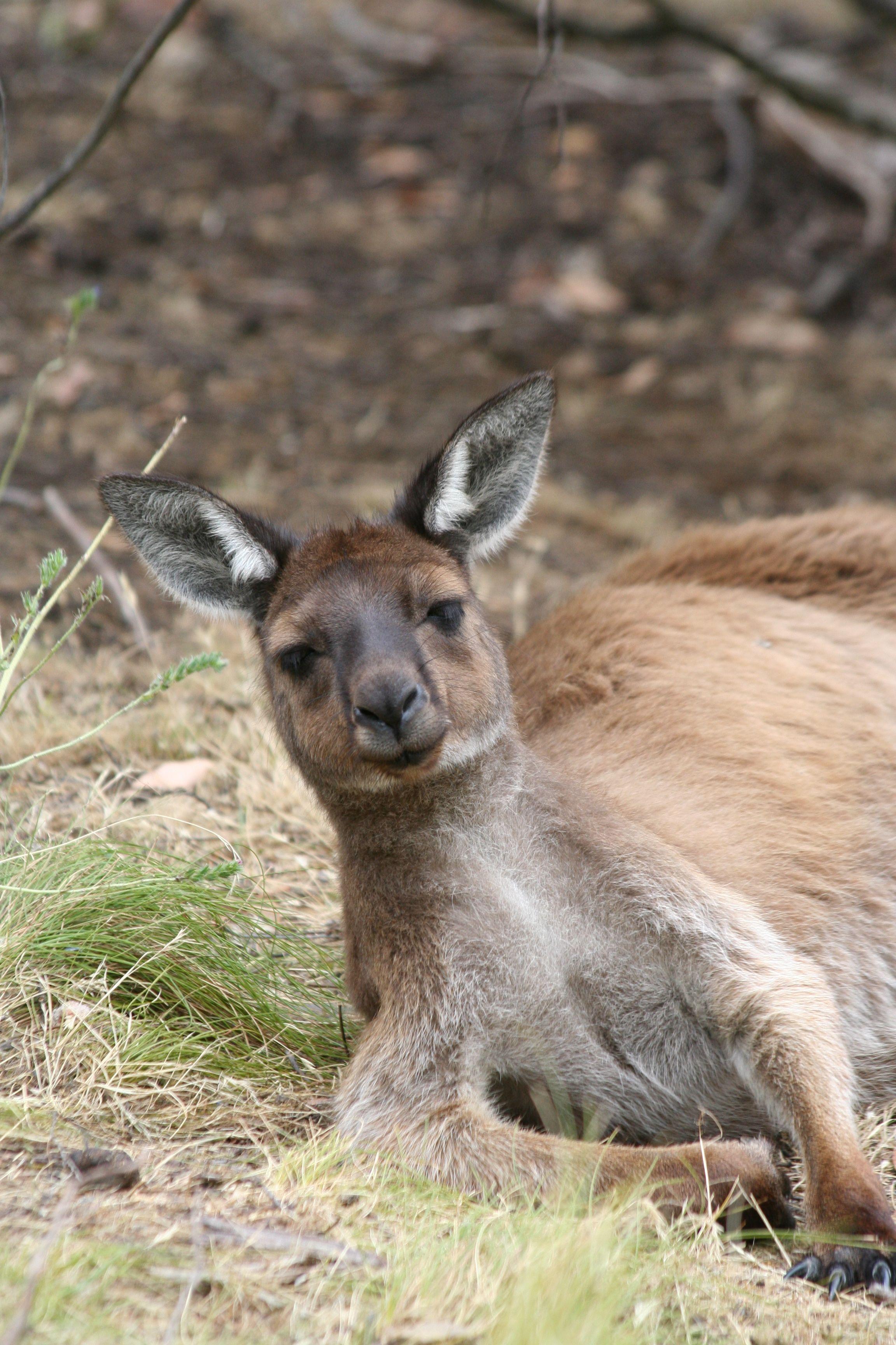 Cleland Wildlife Park Adelaide Australia Favorite Places I Ve