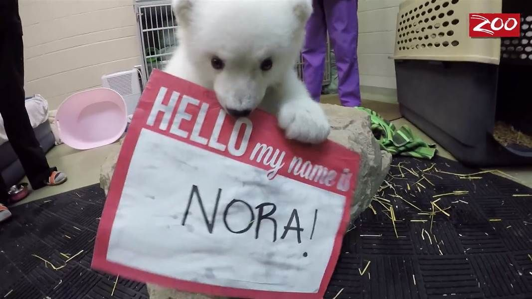 Meet Nora The Rambunctious Young Polar Bear Making Waves At The - 17 zoo animals happy see visitors