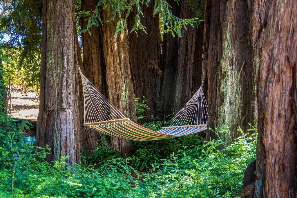 Hammock between Redwood Trees Vineyard Estate in Aptos