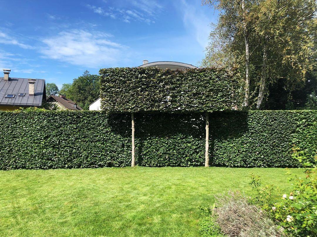 Face Protection Fence Wood Metal Low Larch Height Gray White Of Wood Metal Set Offer Design Secret 1 Zaun Garten Sichtschutz Modern Garten