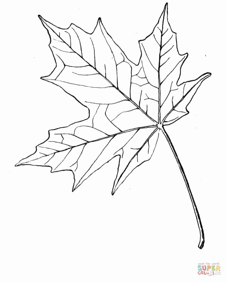 Maple Leaves Coloring Page Luxury Maple Leaf Drawing Template At Getdrawings Maple Leaf Drawing Leaf Coloring Page Leaf Drawing