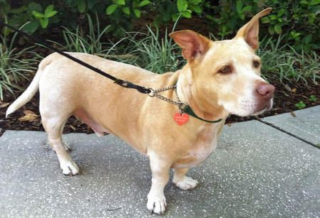 what type of dog is scrappy doo