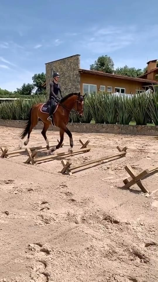 Most Beautiful Horse