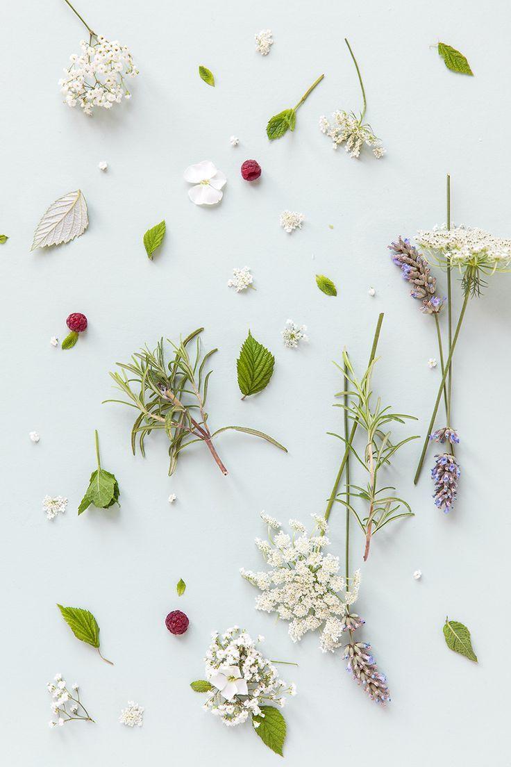 Que Faire Des Fleurs De Rhubarbe minimalist nature. #lovenature   minimalist flowers, flower