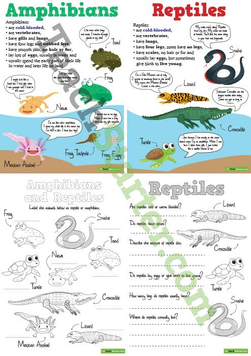 amphibians and reptiles worksheets and posters pack. Black Bedroom Furniture Sets. Home Design Ideas
