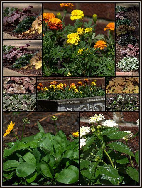 Free Plant Identification Plants, Flowers perennials