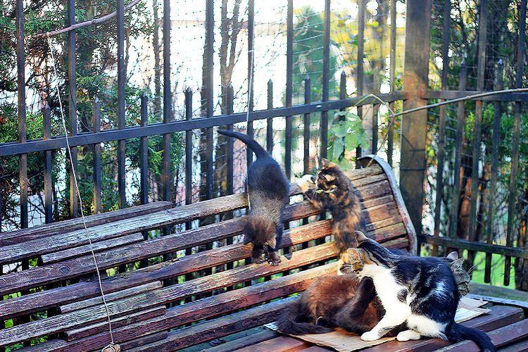Кошки на лавке в парке