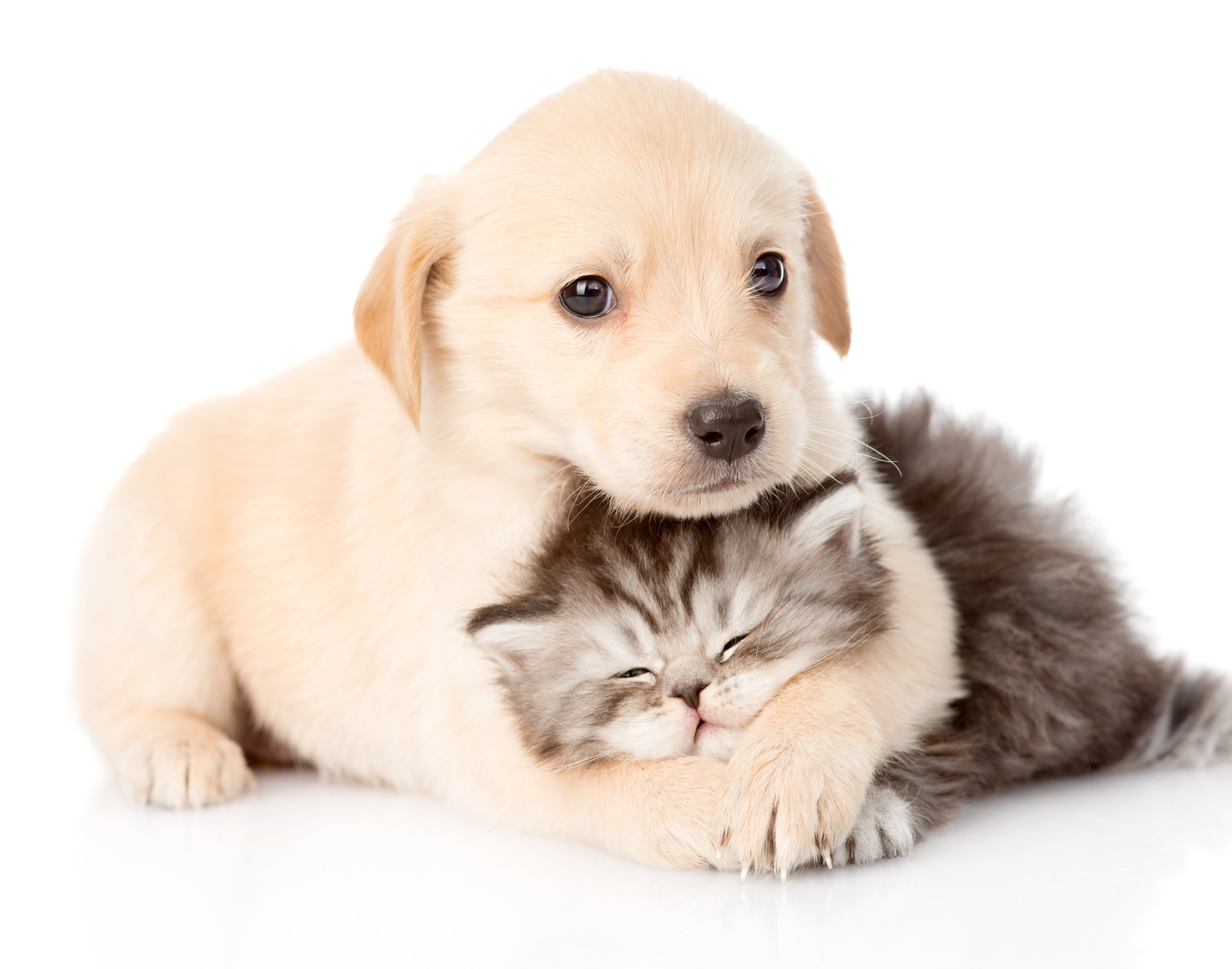 4k Cat And Dog Hd Wallpaper 4830x3800 Pets Kittens And Puppies Puppies