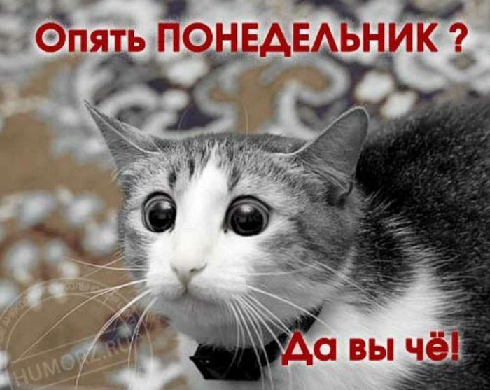 Смешные картинки про утро (35 фото) | Смешные животные ...