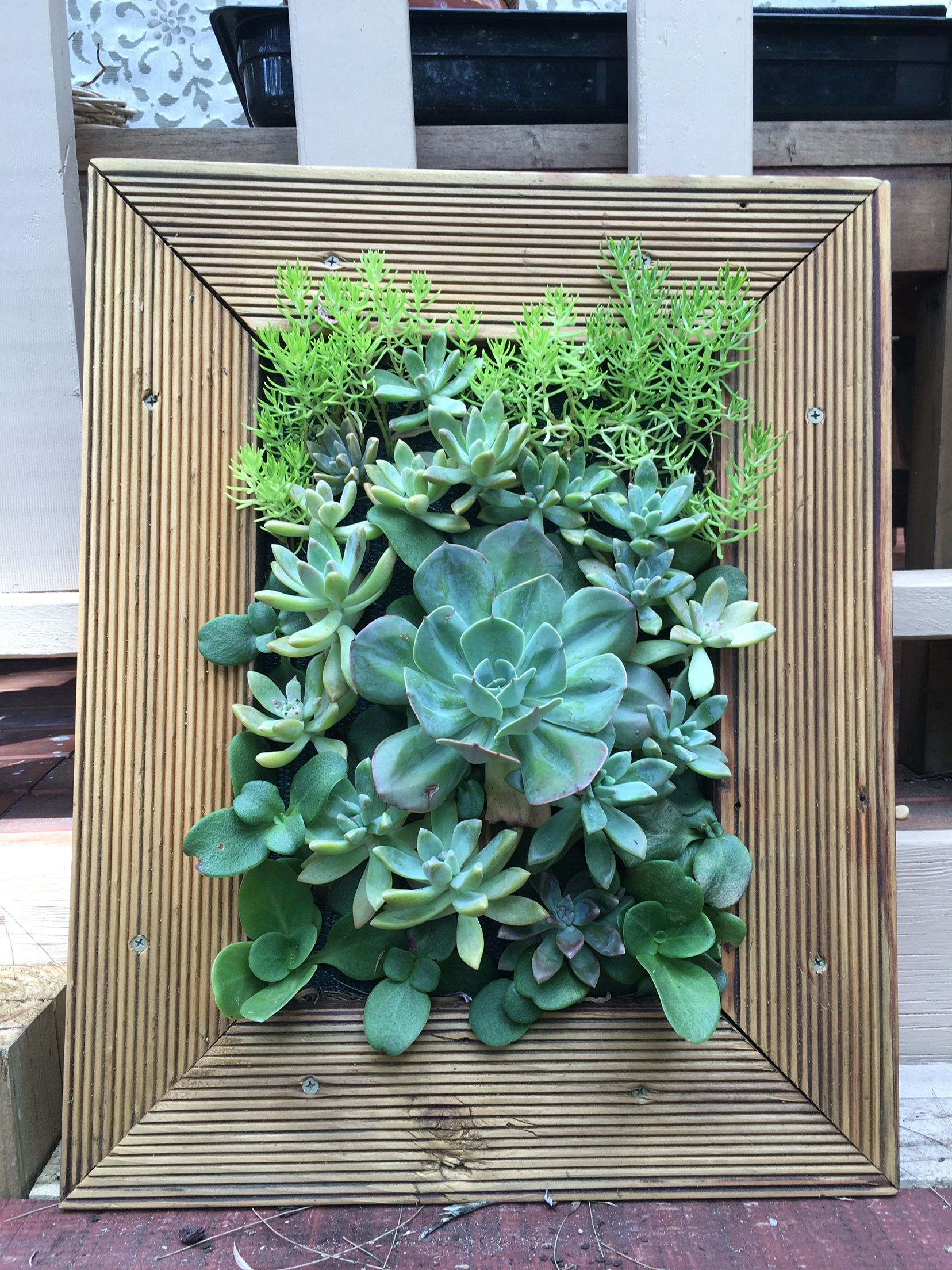 Living wall using recycled timber decking.