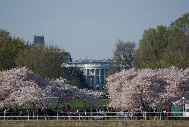 Cherry Blossom Time The White House Where I First Kissed My Love Cherry Blossom Blossom Cool Pictures