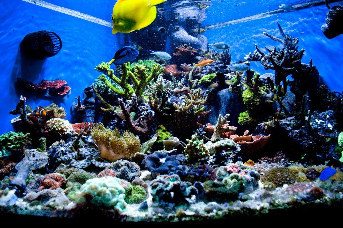 Httpwwwdecoseecompictureaquascapeaquariumsdesignjpg - Home aquarium design