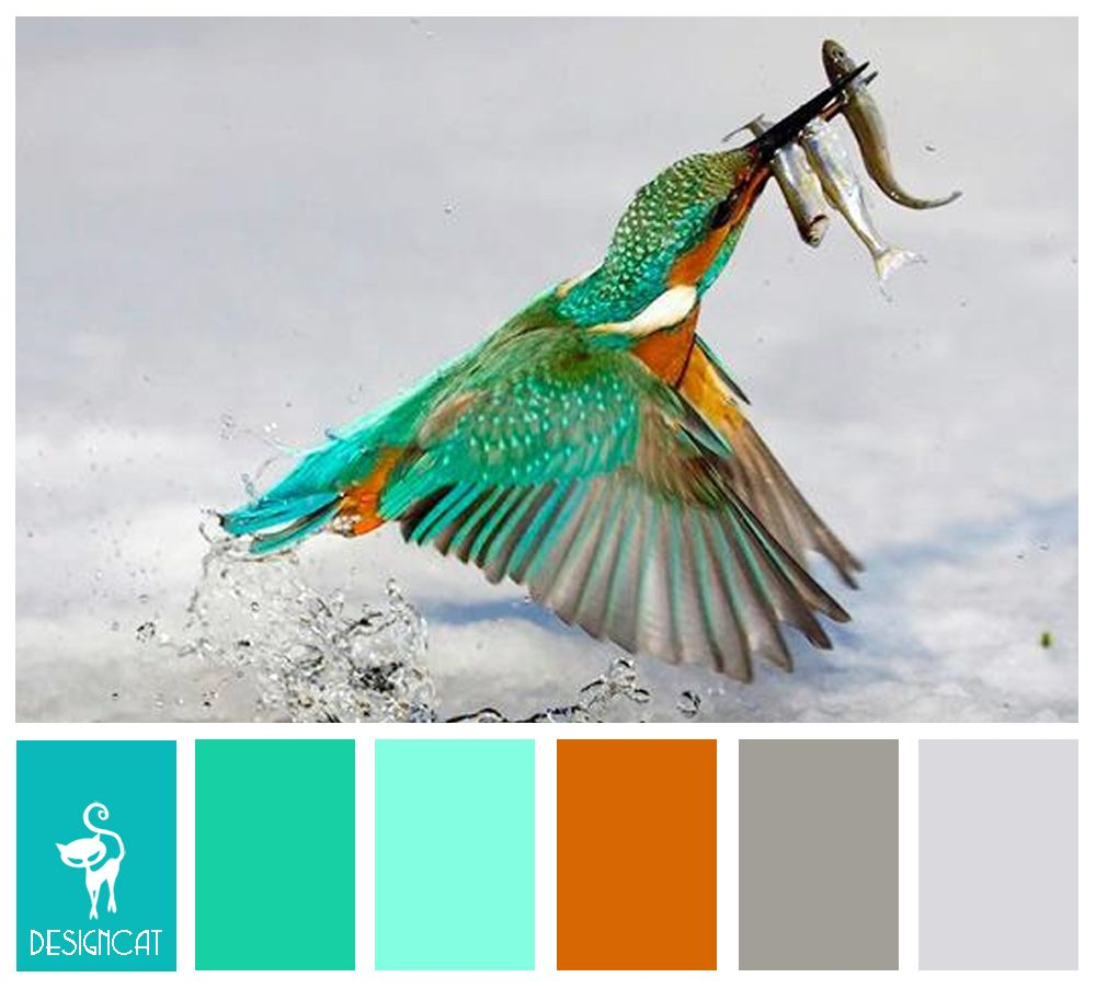 Kingfisher turquoise green tiffany blue orange grey slate kingfisher turquoise green tiffany blue orange grey slate geenschuldenfo Images