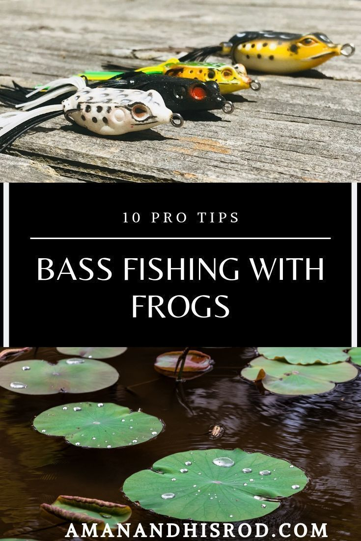 Frog Frog Fishing for is an in depth outlining and to improve your bass game. Catch em like the pro